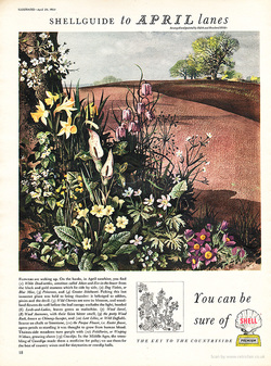 1954 Shell Guide to April lanes - unframed vintage ad
