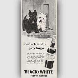 1954 Black & White Scotch ad