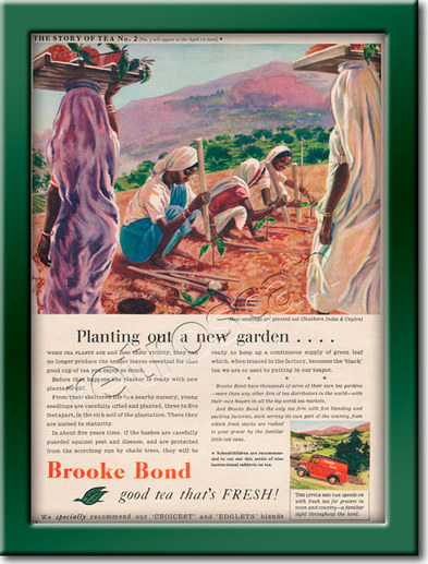 vintage Brooke Bond Story of Tea #02  ad
