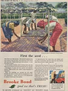 1954 Brooke Bond Story Of Tea 01 - vintage ad
