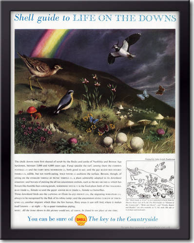 1958 Shell Guide To Life On The Downs - framed preview vintage ad