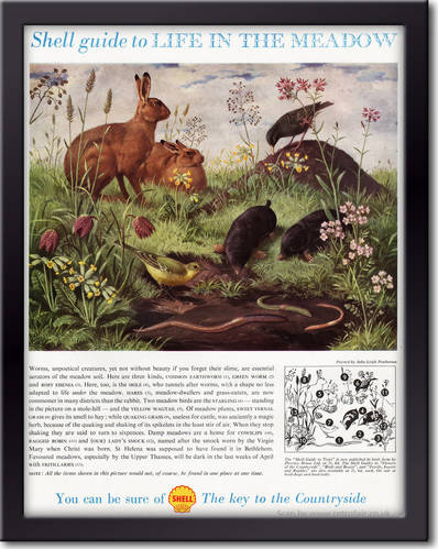 1958 Shell Guide To Life In The Meadow - framed preview vintage ad