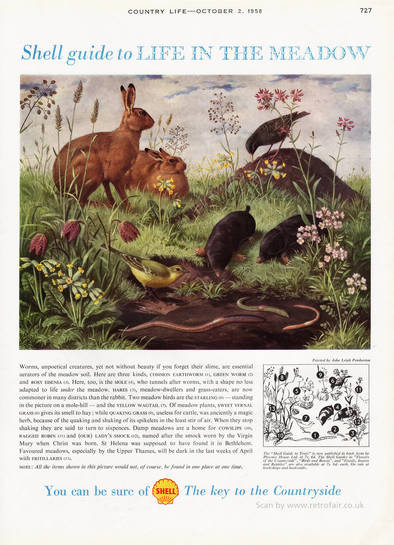 1958 Shell Guide To Life In The Meadow - unframed vintage ad
