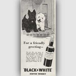 1954 ​Black & White Whisky vintage advert