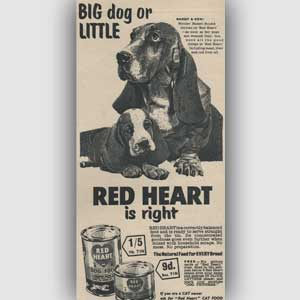 1955 Red Heart Dog Food (Basset) - Vintage Ad