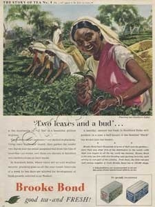 1954 Brooke Bond Story of Tea 4