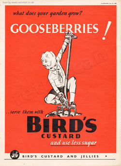 1940 Bird's Custard - unframed vintage ad