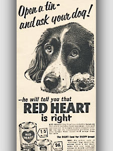 1955 Red Heart Dog Food vintage ad
