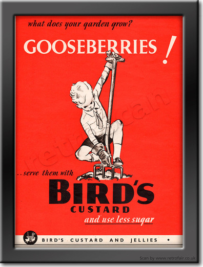 1940 Bird's Custard - framed preview retro