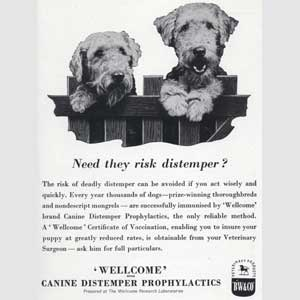 1951 Wellcome Pet Care - Vintage Ad