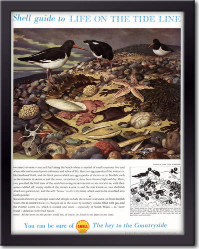 1958 Shell Guide To Life On The Tide Line - framed preview vintage ad