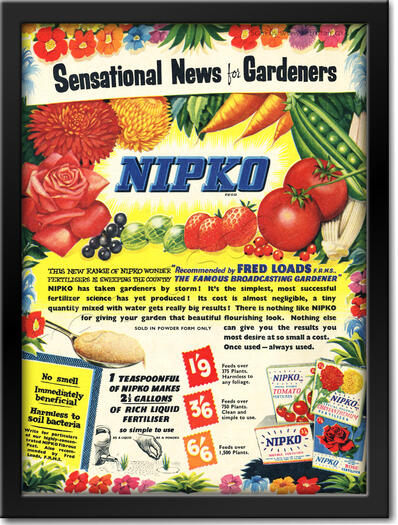 1955 vintage Nipko advert