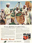 1954 Brooke Bond Story of Tea No. 5